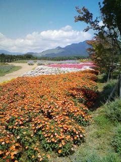 ♪花の都の♪